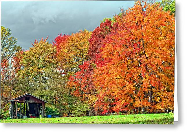 West Virginia Maples 2 Greeting Card by Steve Harrington