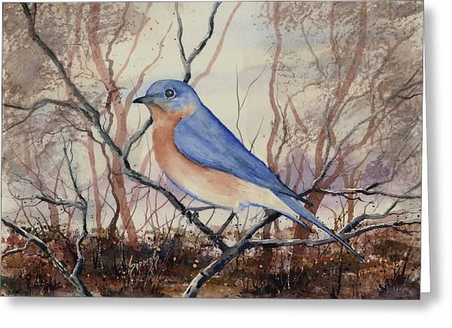 Western Bluebird Greeting Card by Sam Sidders