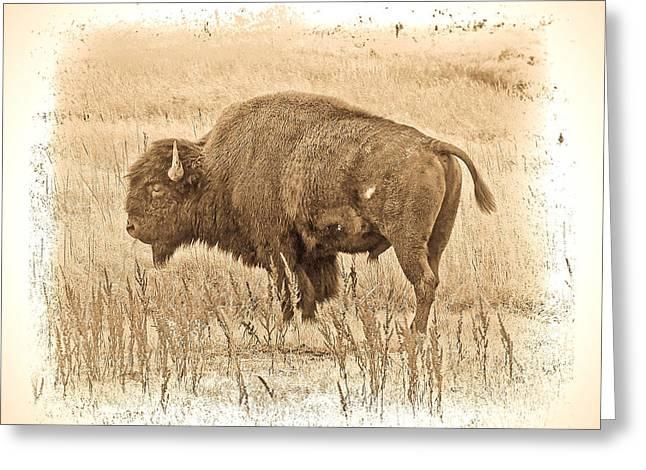 Western Buffalo Greeting Card by Steve McKinzie