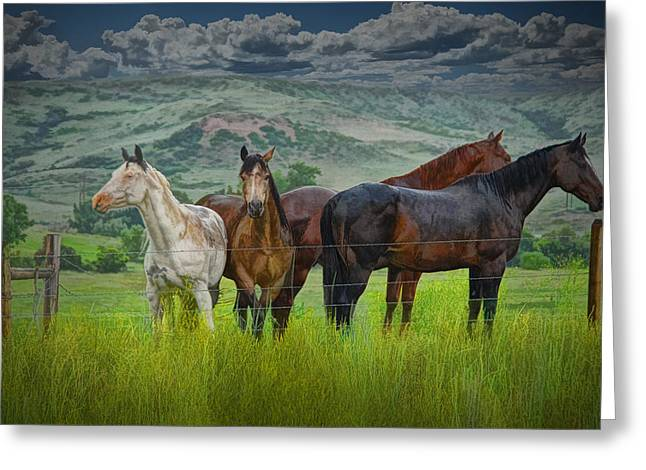 Hooved Mammal Greeting Cards - Western Horses in a Pasture No.0562 Greeting Card by Randall Nyhof