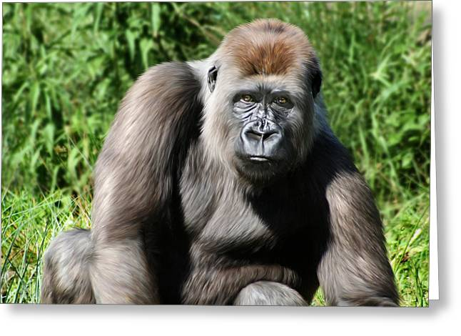 Ape. Great Ape Greeting Cards - Western Lowland Gorilla Female Greeting Card by Julie L Hoddinott