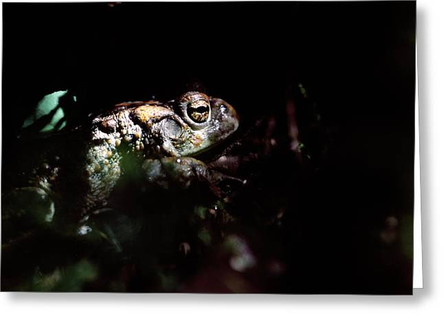 Forest At Night Greeting Cards - Western Toad Greeting Card by Alan Sirulnikoff