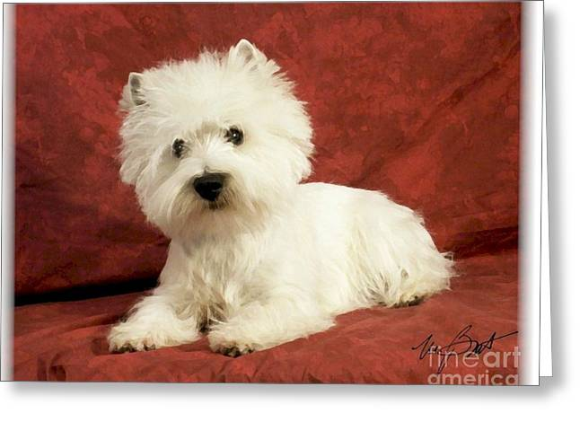 Westie Digital Art Greeting Cards - Westhighland White Terrier pup Greeting Card by Maxine Bochnia