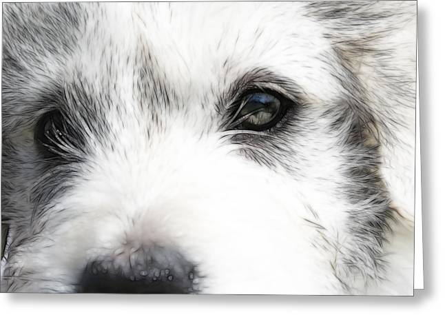 Westie Art Greeting Cards - Westie Greeting Card by Tilly Williams