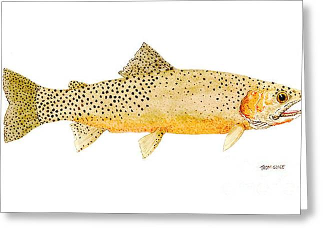 Thom Glace Greeting Cards - Westslope Cutthroat Trout Greeting Card by Thom Glace