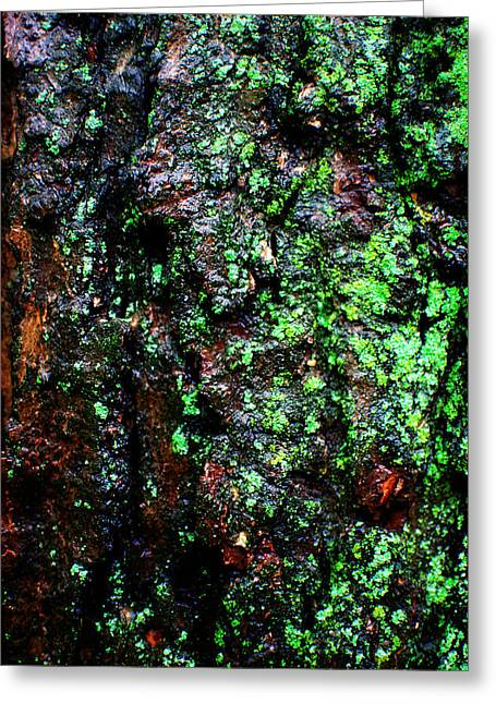 Knotty Greeting Cards - Wet Bark Greeting Card by Simone Hester
