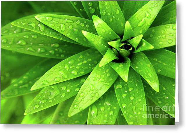 Flourished Greeting Cards - Wet Foliage Greeting Card by Carlos Caetano