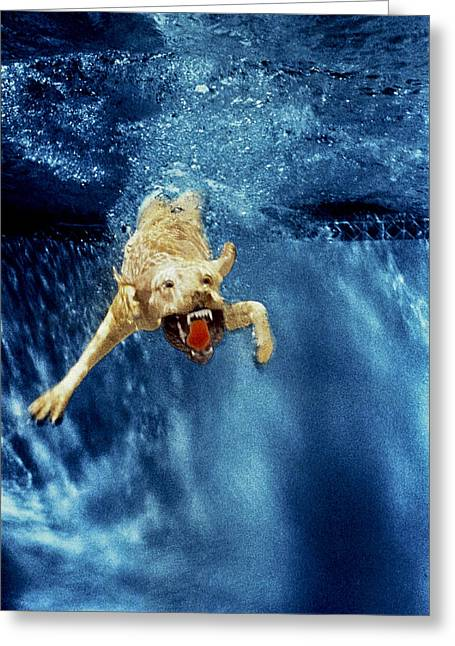 Diving Dog Greeting Cards - Wet Paws Greeting Card by Jill Reger