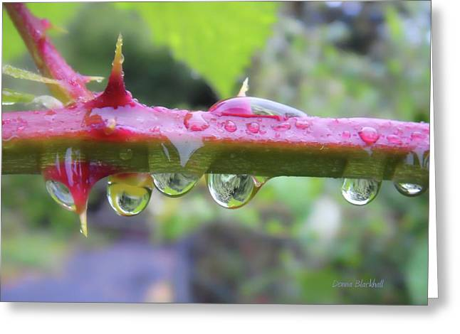 Wet Prick Greeting Card by Donna Blackhall