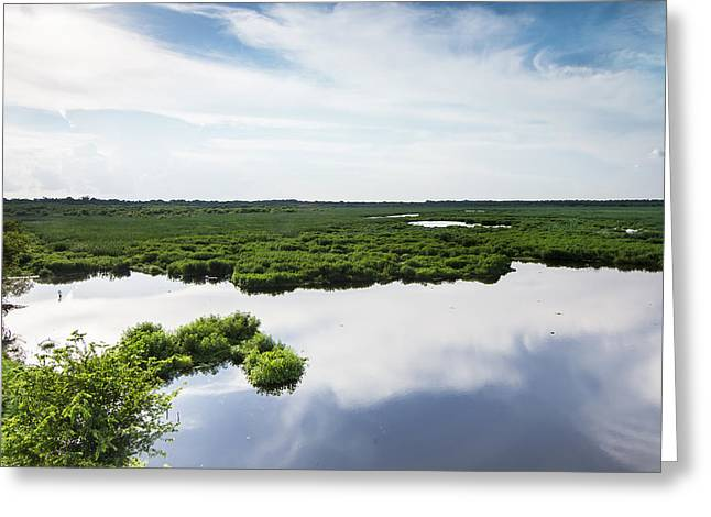 Wild Bird Greeting Cards - Wetland and water reflection of sky Greeting Card by Ellie Teramoto