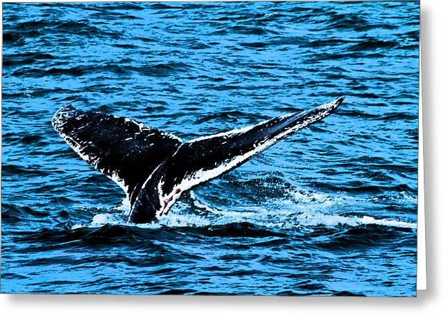 Ocean Mammals Greeting Cards - Whale Dip Greeting Card by Karol  Livote