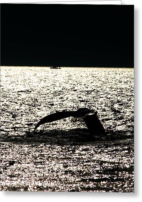 Whale In Sunset Greeting Card by Paul Ge