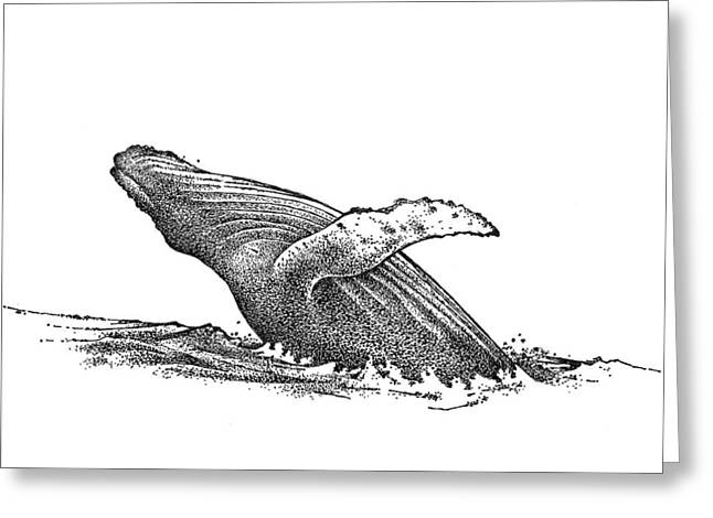 San Francisco Bay Drawings Greeting Cards - Whale Greeting Card by Rob M Harper