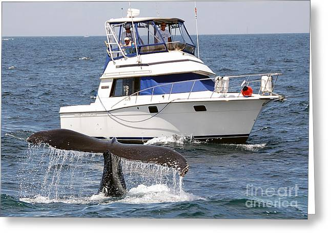 Pictures Of Sea Life Greeting Cards - Whale Watching Greeting Card by Jim Chamberlain