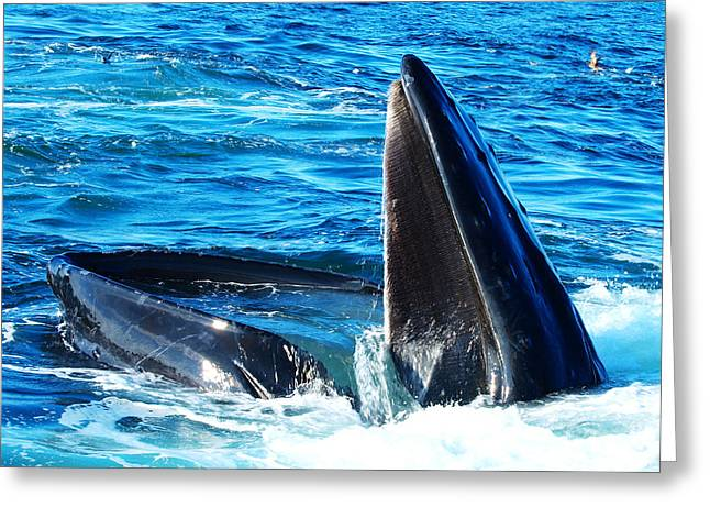 Ocean Mammals Digital Art Greeting Cards - Whales opening mouth Greeting Card by Paul Ge
