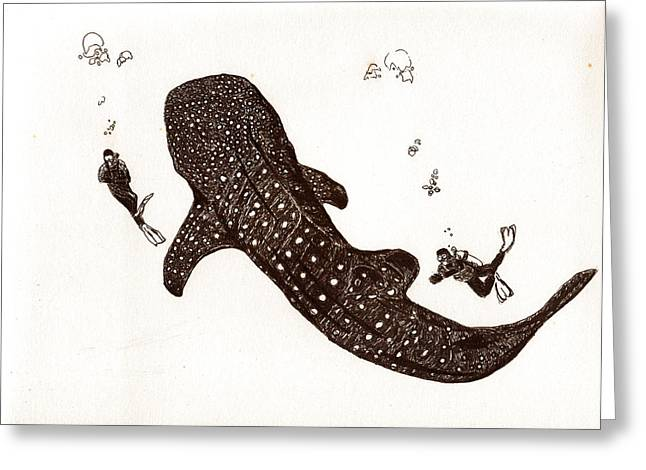 Scuba Diving Drawings Greeting Cards - Whaleshark Greeting Card by Sheryl Brandes