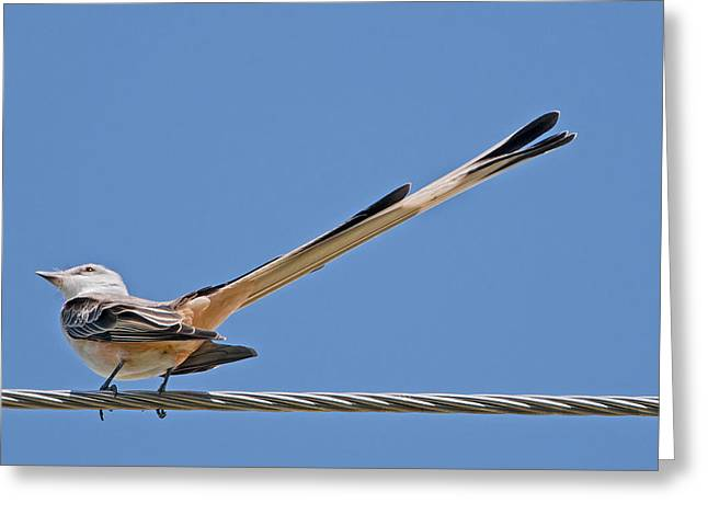 What A Long Tail You Have Greeting Card by Bonnie Barry