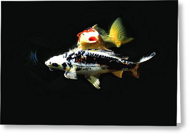 Oranda Greeting Cards - What a Pair Greeting Card by Don Mann