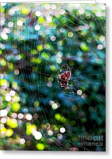 Spiderwebs Greeting Cards - What a Tangled Web Greeting Card by Colleen Kammerer