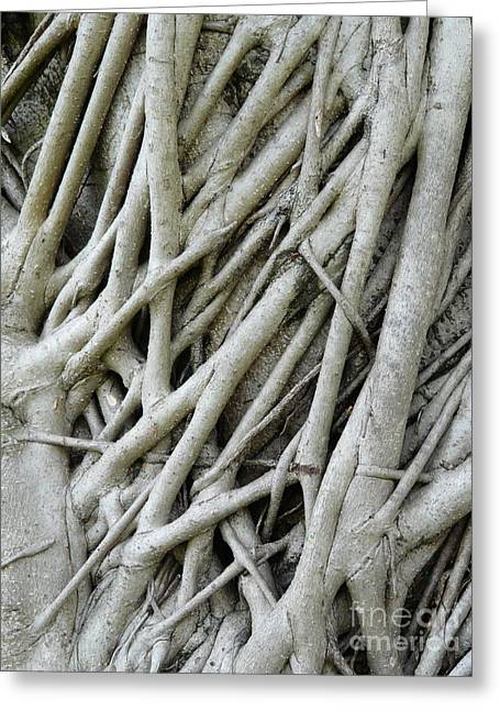 Tree Roots Greeting Cards - What a Tangled Web We Weave Greeting Card by Donna McLarty