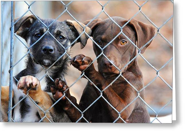 Puppies Photographs Greeting Cards - What About Us Greeting Card by Jai Johnson