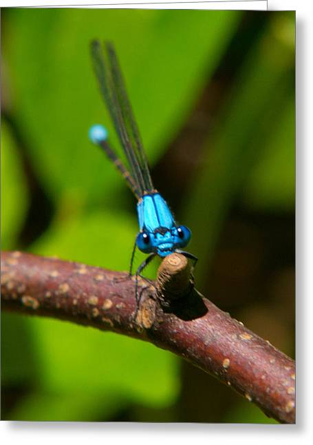 Dragon Flies Photographs Greeting Cards - What Are You Looking At Greeting Card by Frank Pietlock