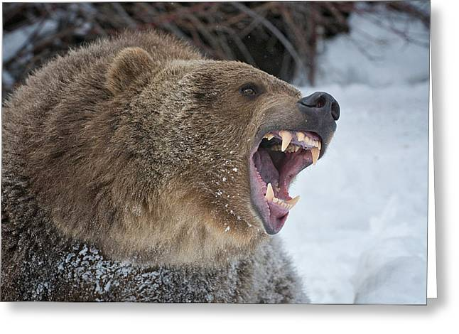 Growling Greeting Cards - What Nice Teeth You Have Greeting Card by Howard Knauer
