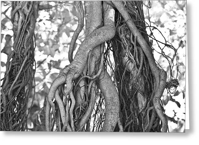 What Trees Know Greeting Card by Betsy A  Cutler