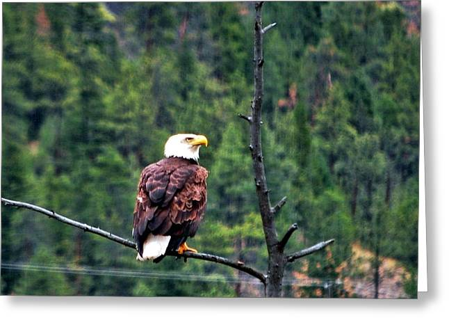 Eagle Greeting Cards - What was that Greeting Card by Don Mann