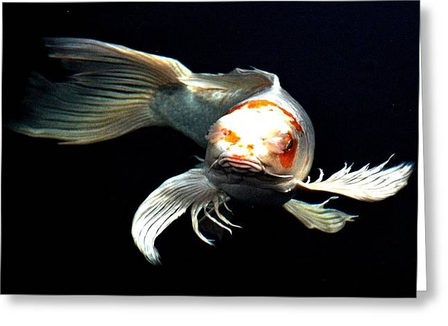 Oranda Greeting Cards - What you doin up there Greeting Card by Don Mann
