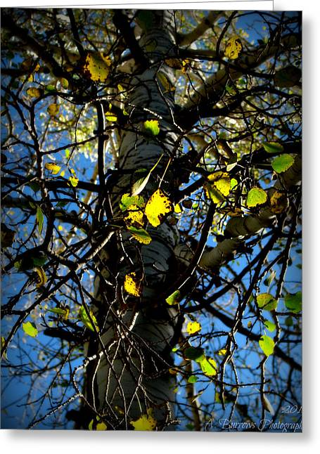 Prescott Greeting Cards - Whats Left of the Autumn Leaves Greeting Card by Aaron Burrows