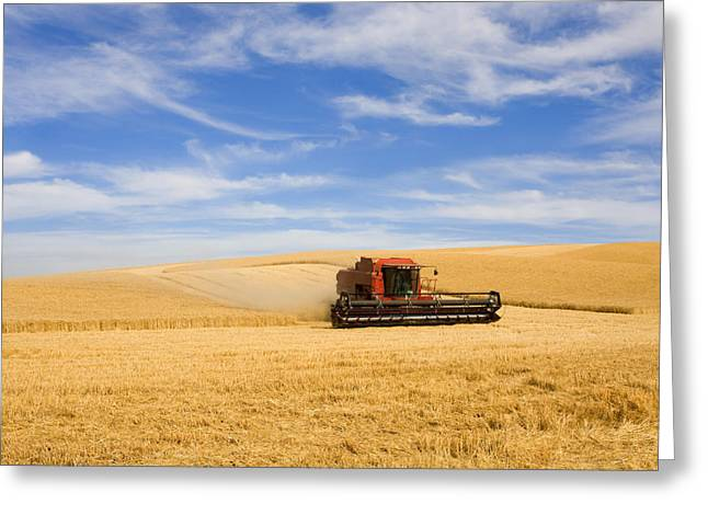 Harvest Photographs Greeting Cards - Wheat Harvest Greeting Card by Mike  Dawson