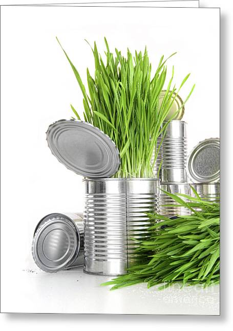 Aluminium Greeting Cards - Wheatgrass in aluminium cans on white Greeting Card by Sandra Cunningham