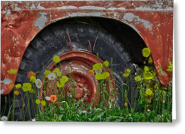 Edmonton Photographer Greeting Cards - Wheels And Seeds  Greeting Card by Jerry Cordeiro