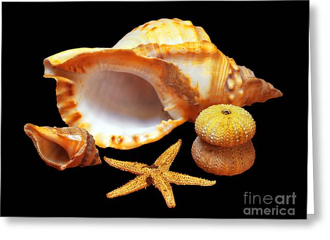 Decorative Fish Greeting Cards - Whelk Greeting Card by Carlos Caetano