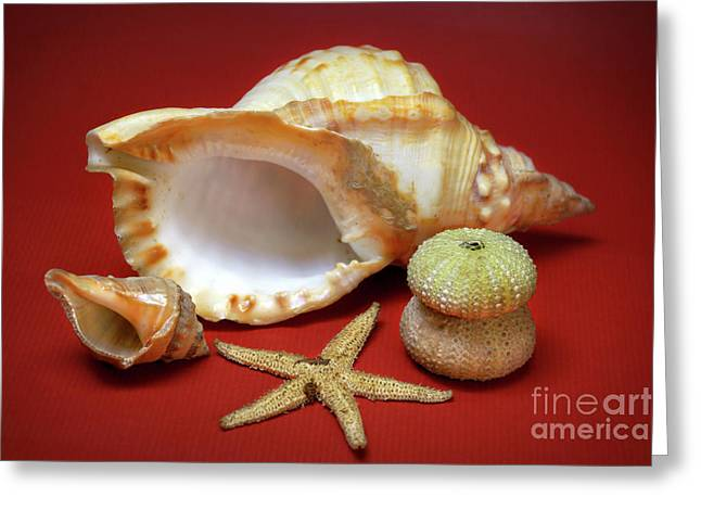Decorative Fish Greeting Cards - Whelks Greeting Card by Carlos Caetano