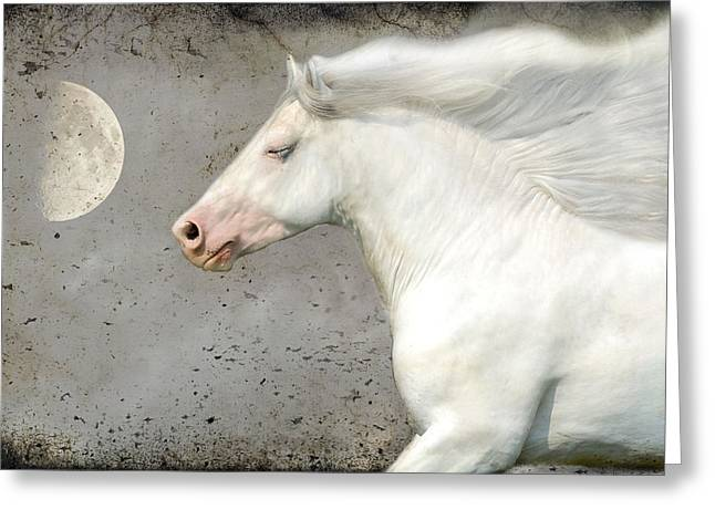 Horse Photographs Greeting Cards - When horses Dream Greeting Card by Fran J Scott