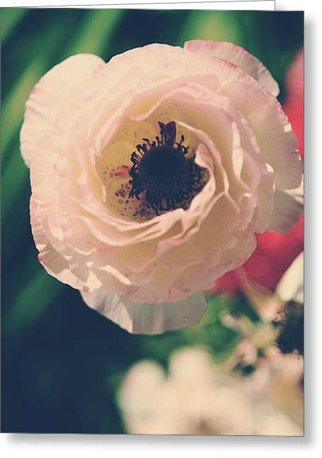 Stamen Greeting Cards - When Love Was Fresh and New Greeting Card by Laurie Search