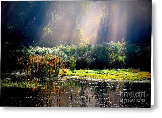 When Morning Hits The Marsh Greeting Card by Carol Groenen