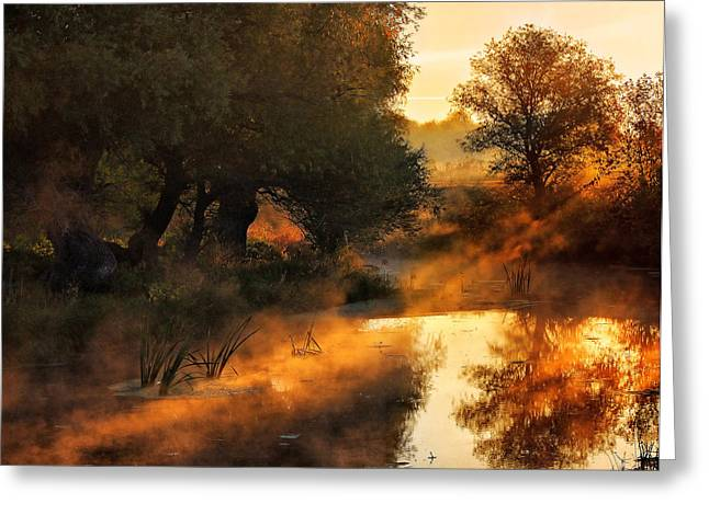Stream Pyrography Greeting Cards - When Nature Paints With Light Greeting Card by Oliver Leicher