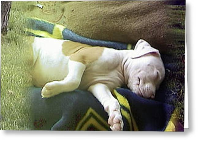 Best Friend Greeting Cards - When puppies dream Greeting Card by Ralph Hecht
