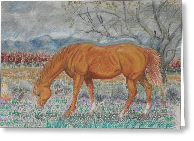 Quarter Horses Drawings Greeting Cards - When You and I Were Young Greeting Card by Dawn Senior-Trask