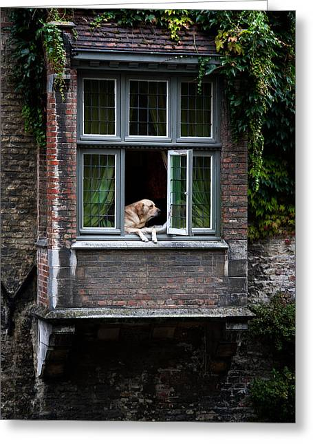 Attentive Labrador Dog Greeting Cards - Where Is My Dinner Greeting Card by Jason Smith
