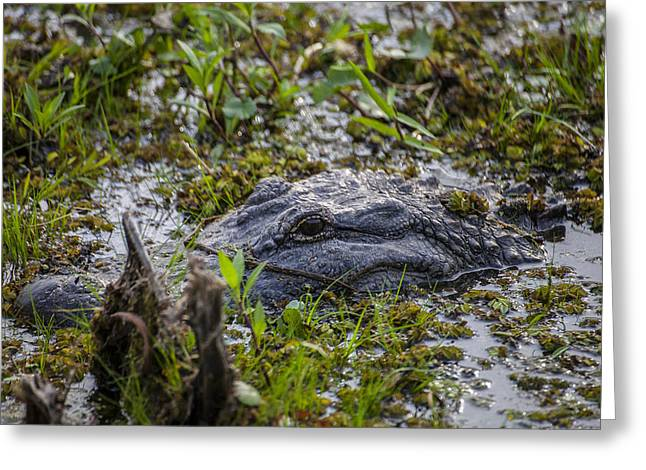 Louisiana Alligator Greeting Cards - Where is the Gator Greeting Card by Forest Alan Lee