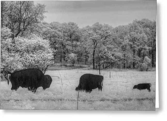 Grazing Snow Greeting Cards - Where the Buffalo Roam Greeting Card by Jane Linders