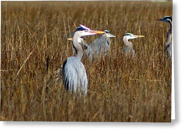 Water Fowl Greeting Cards - Which Way Did He Go Greeting Card by Jennifer Stockman
