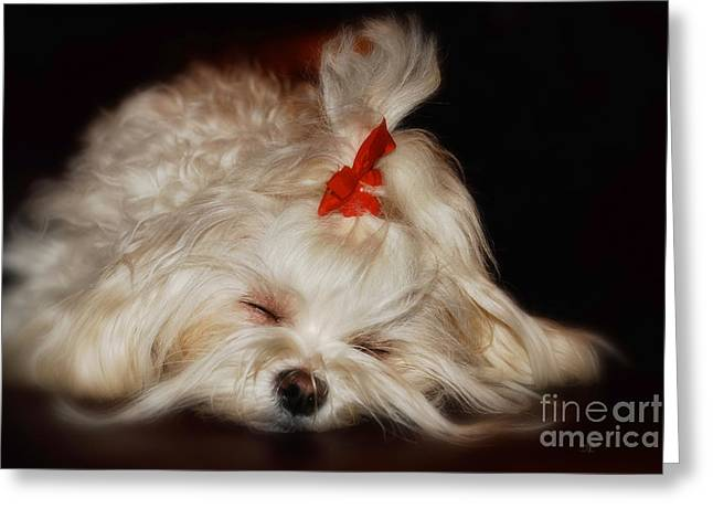 Sleeping Maltese Greeting Cards - While Sugarplums Danced Greeting Card by Lois Bryan