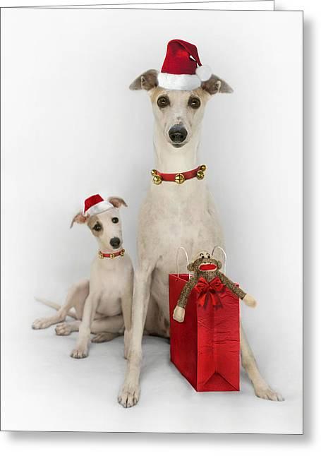 John Clum Greeting Cards - Whippet Christmas Greeting Card by John Clum