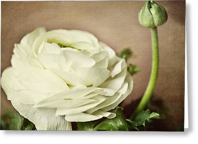 Ranunculus Greeting Cards - Whisper Greeting Card by Lisa Russo