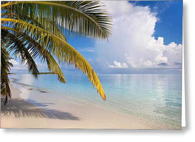 Spa Center Greeting Cards - Whispering Palm on the Tropical beach Greeting Card by Jenny Rainbow